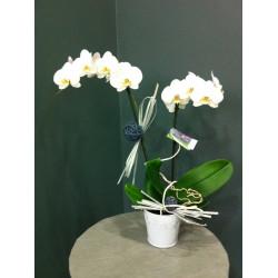 Orchidée phalaenopsis avec cache pot et déco blanche